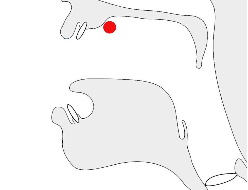 mouth postalveolar